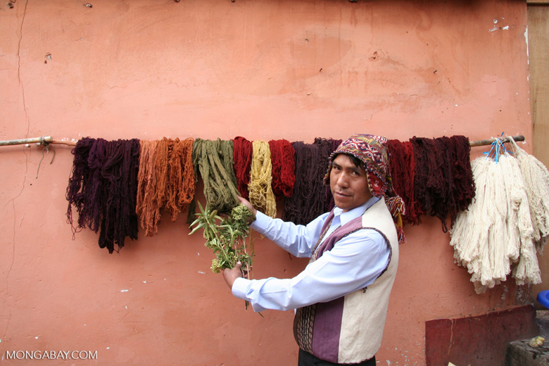 Natural dyes used for coloring alpaca and sheep wool in the Andes