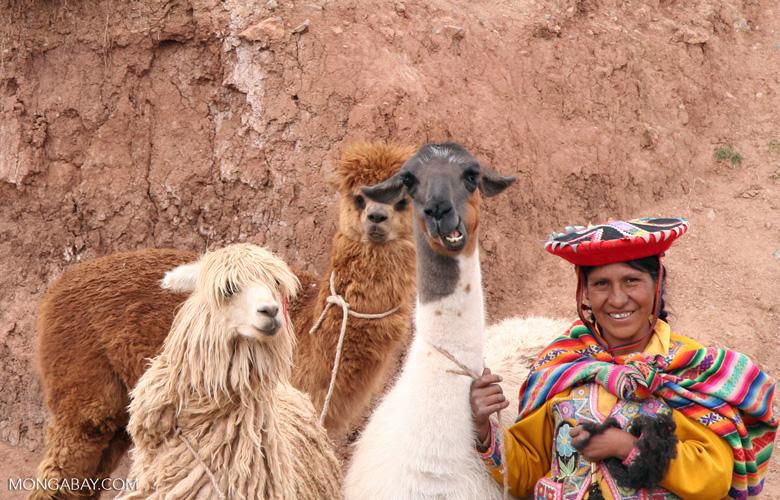 Woman with llama; sheep; alpaca [cuzco-Cuzco_1021_1409]