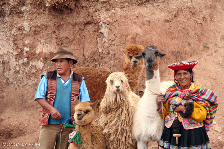 Family with llama; sheep; alpaca