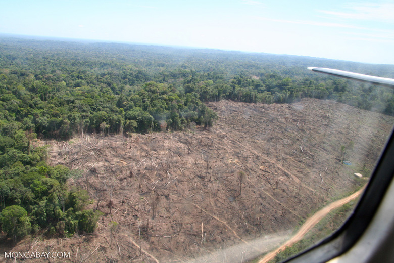 Clear-cutting in the Amazon rainforest as viewed overhead by plane