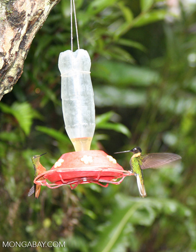 Hummingbirds on bird feeder