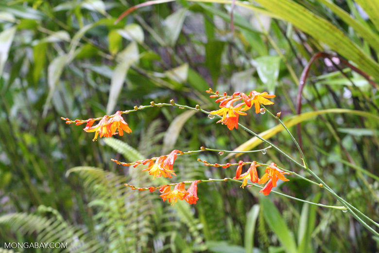 Orange; yellow; and red flowers