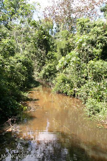 Blackwater creek [manu-Manu_1022_1723]