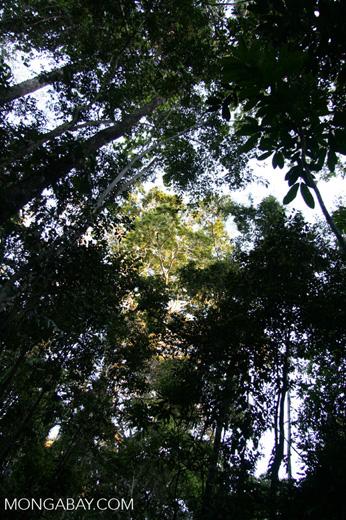 Rainforest canopy from below