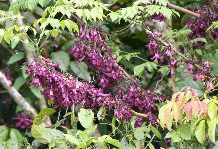 Purple / magenta flowers