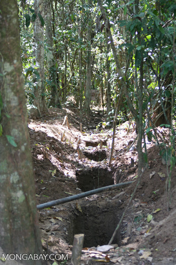 Digging pipeline in rainforest