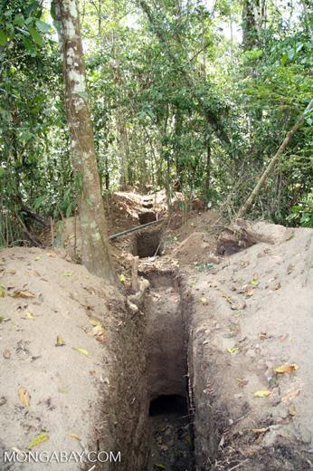 Digging pipeline in rainforest [manu-Manu_1023_2409]