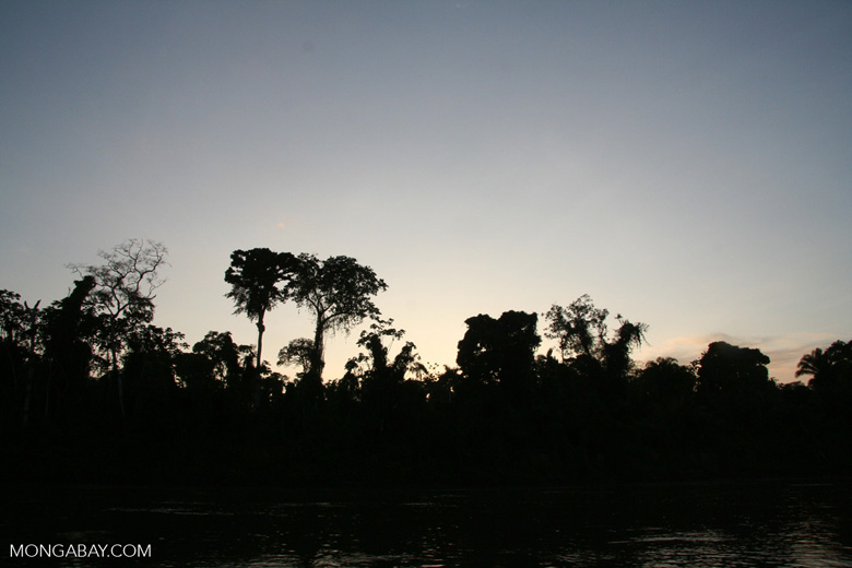 Rainforest along the Rio Tambopata