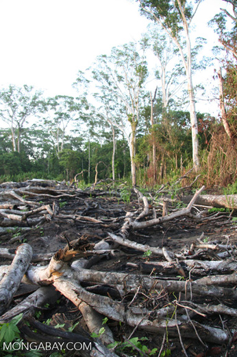 Slash-and-burned section of rain forest