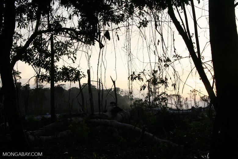 Deforested area as seen through trees