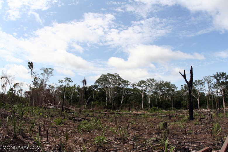 Slash-and-burn agriculture in the Amazon rain forest of Peru [manu-Manu_1024_2895]