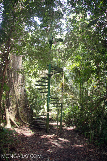 Spiral staircase leading up rain forest canopy tower