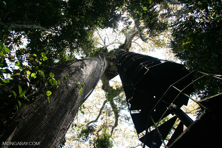 Spiral staircase leading up canopy tower