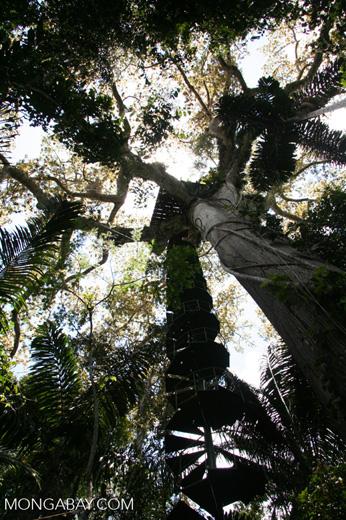 Kapok canopy platform