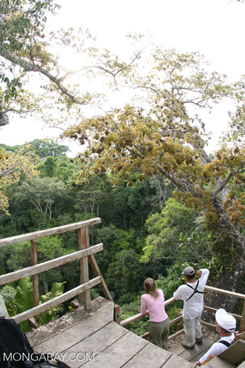 Tourists on platform in giant Kapok tree overlooking the rain forest canopy