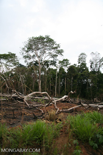 Slash-and-burn agriculture in the Amazon rain forest of Peru