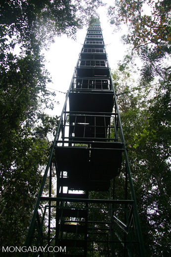 Canopy tower at Posada Amazonas