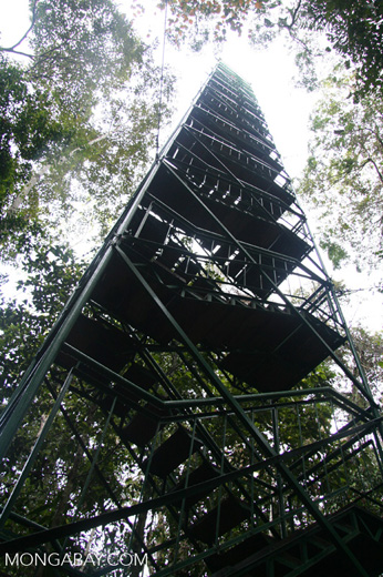 Canopy tower at Posada Amazonas [tambopata-Tambopata_1026_3354]