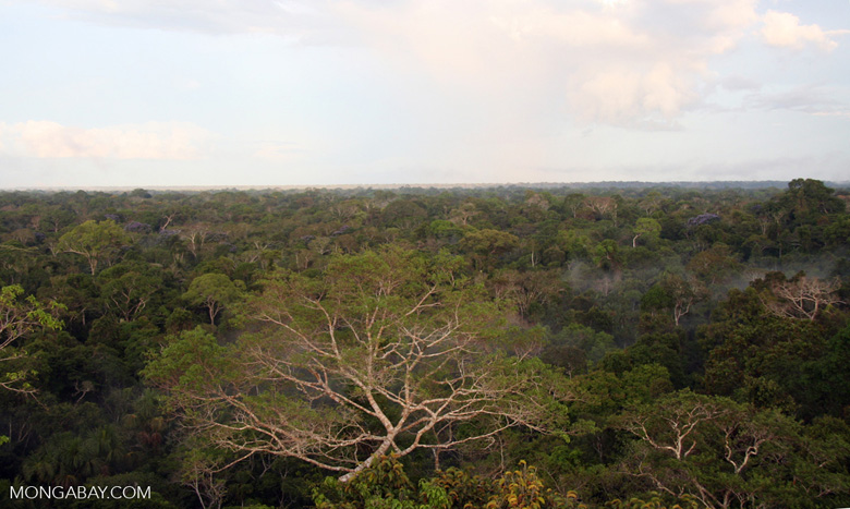 View of rain forest canopy