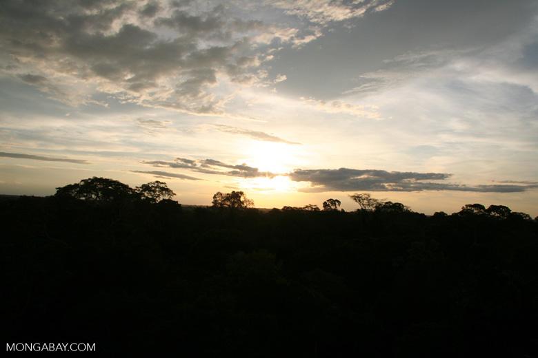 Amazon sunset over rainforest canopy [tambopata-Tambopata_1026_3381]