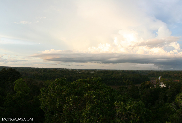 Late afternoon in the Amazon rain forest