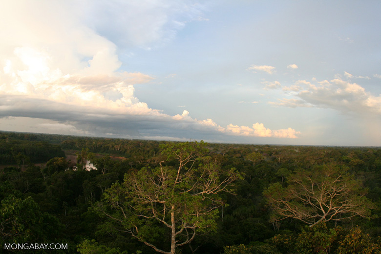 Rain forest canopy in the late afternoon