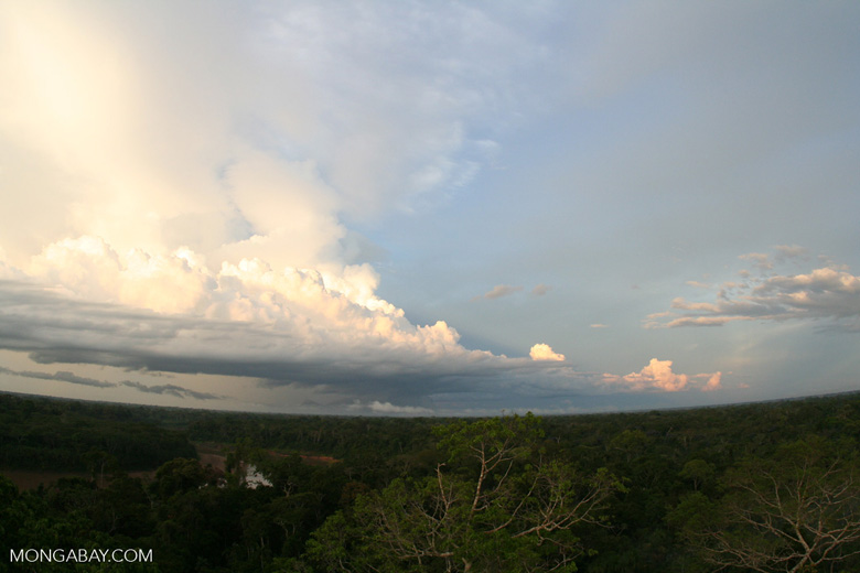 Late afternoon in the Amazon rainforest