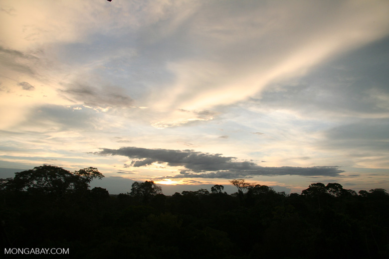 Sunset over the rain forest canopy