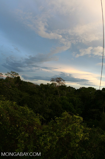 Rain forest canopy [tambopata-Tambopata_1026_3409]