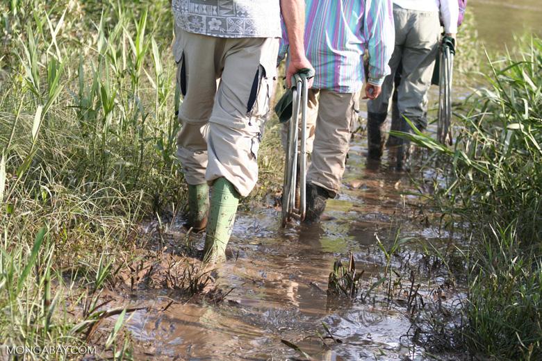 Slogging through mud along the Tambopata