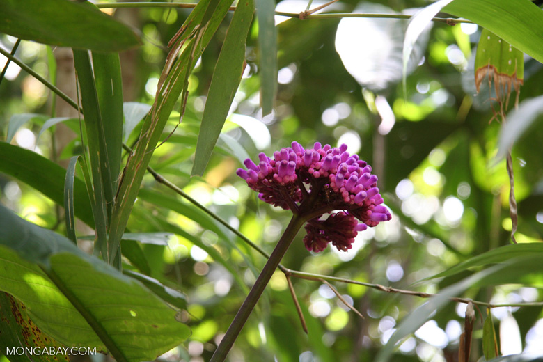 Purple flowers in forest understorey