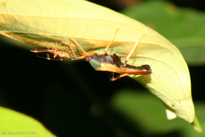 Red; yellow; and green insect