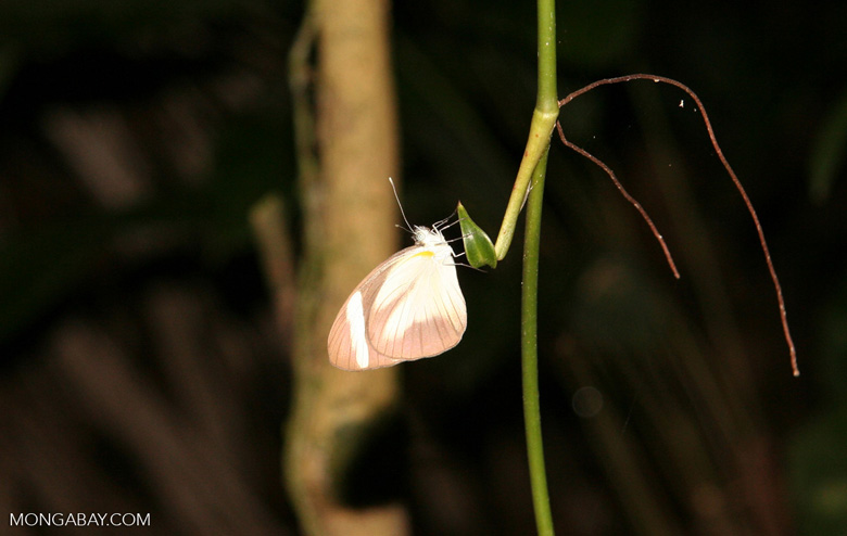 Small butterfly at night