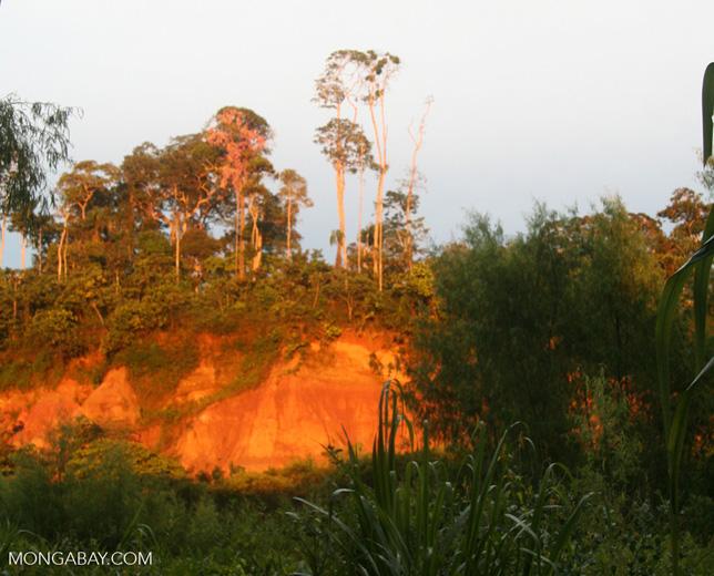 Sunrise illuminating the macaw clay lick at Tambopata Research Center