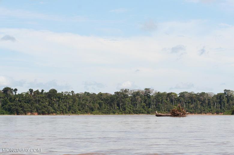 Fallen tree in Rio Tambopata