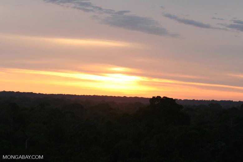 Sunrise over the rainforest canopy
