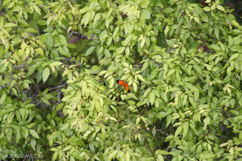 Butterfly in the rainforest canopy