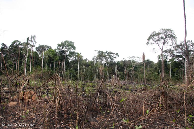 Slash-and-burn agriculture in the rain forest near Puerto Maldanado