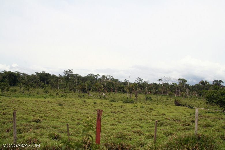 Deforestation for cattle pastureland near Puerto Maldanado