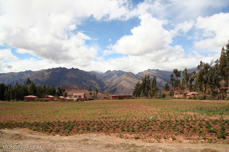 Andean farmlands with snow-capped peaks in background
