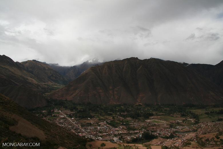 Maize field near Cuzco