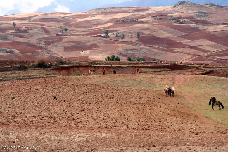 Farmers working countryside near Cuzco