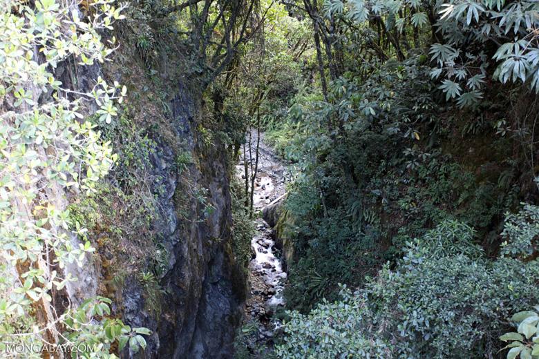 Rainforest stream in Manu [manu_0008]