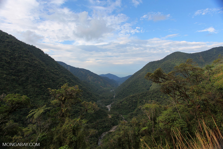 View of the Amazon rainforest down the Kosnipata Valley