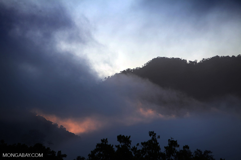 Mist over the Amazon rainforest at sunset