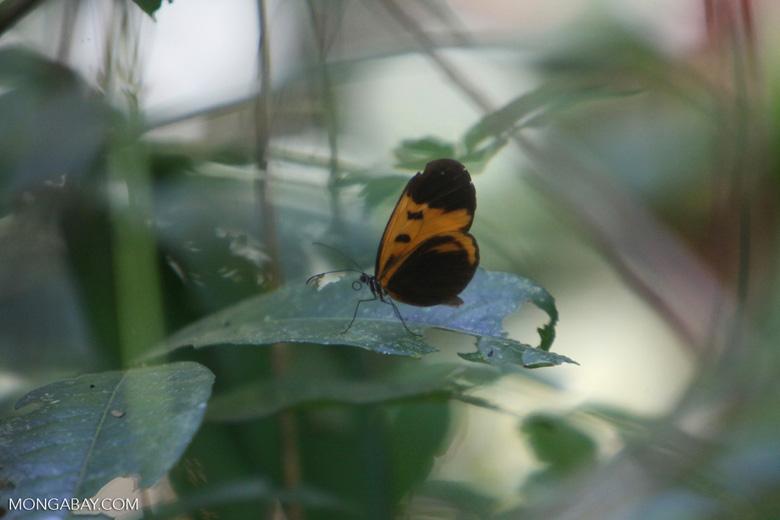 Butterflies feeding on a flower