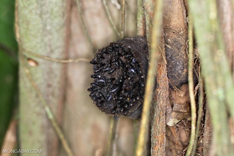 Sweat bee nest
