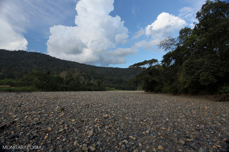 Dry river bed in the Amazon basin [manu_0915]