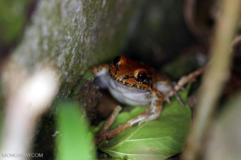 Frog [manu_1031]