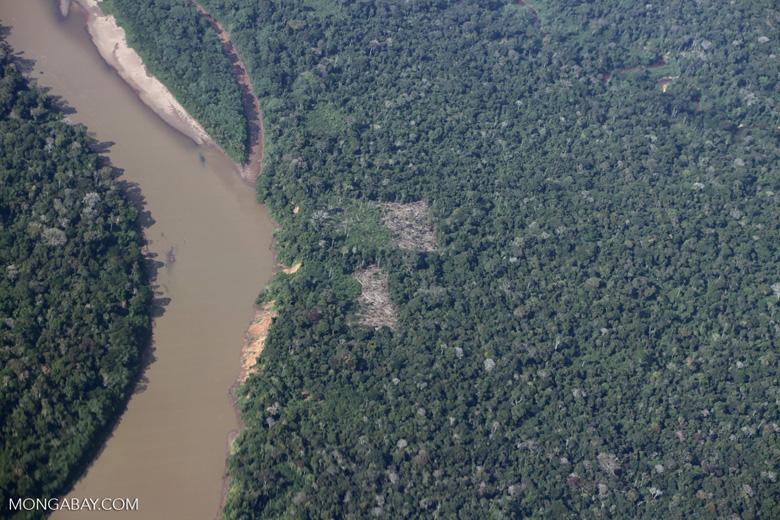 Smallholder clearing along the Tambopata river in the Peruvian Amazon
